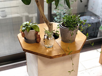 観葉植物を置く